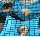 Ferret Bedding includes hammocks for Everyone!