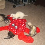 Octoplay Ferret Toy 4