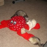 Octoplay Ferret Toy 5
